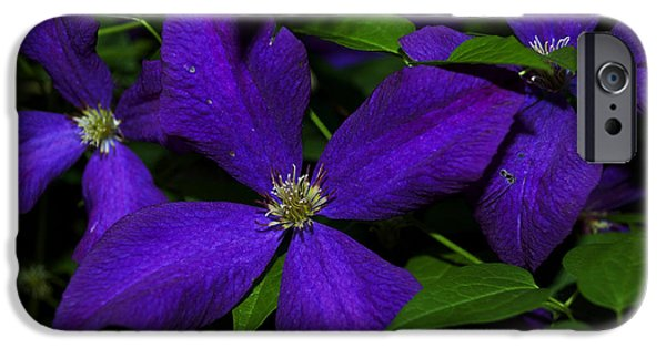 President iPhone Cases - Purple Climbing Clematis -  Luther Fine Art  iPhone Case by Luther  Fine Art