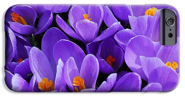 Violet Photographs iPhone Cases - Purple crocus iPhone Case by Elena Elisseeva