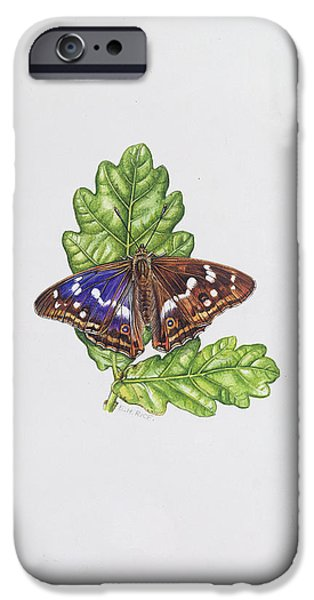 Botanical iPhone Cases - Purple Emperor Butterfly On Oak Leaves Wc iPhone Case by Elizabeth Rice