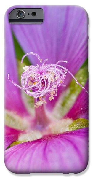 Purple Flower iPhone Case by Oscar Karlsson