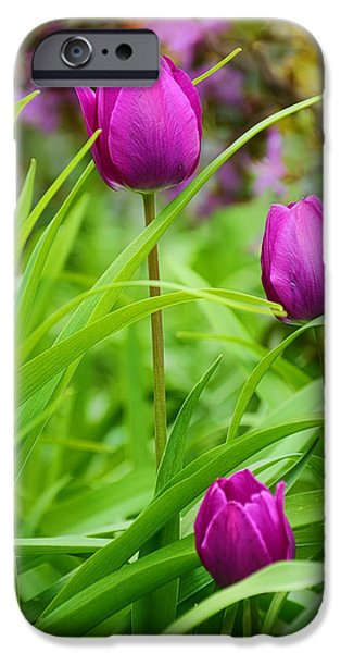 Purple Art iPhone Cases - Purple Gems- Purple Tulips Rhode Island Tulips Purple Flower iPhone Case by Lourry Legarde