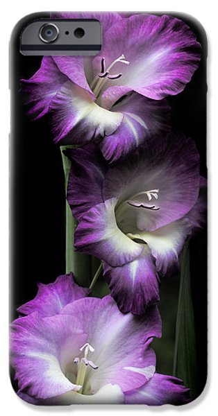Gladiolas iPhone Cases - Purple Gladiola Flowers Evening Light iPhone Case by Jennie Marie Schell
