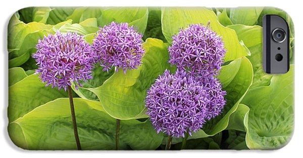 Allium Hollandicum iPhone Cases - Purple Globes  iPhone Case by Marina Kojukhova