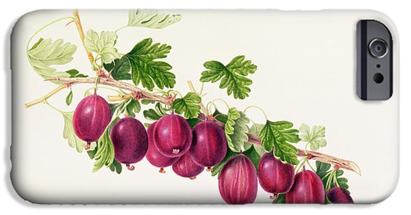 Garden iPhone Cases - Purple Gooseberry iPhone Case by William Hooker