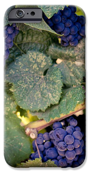 Purple Grapes iPhone Cases - Purple Grapes on the Vine iPhone Case by Ana V  Ramirez