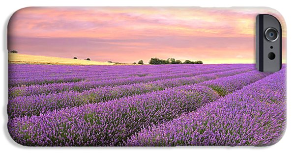 Harvest Time iPhone Cases - Purple Haze - Lavender Field at Sunrise iPhone Case by Gill Billington