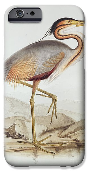 Animal Drawings iPhone Cases - Purple Heron iPhone Case by Edward Lear