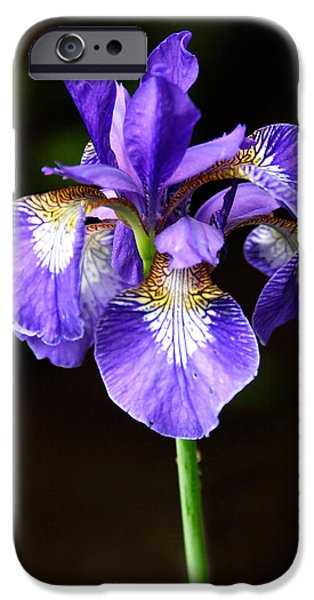 Macro Photographs iPhone Cases - Purple Iris iPhone Case by Adam Romanowicz