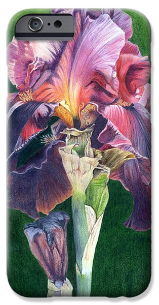 Flora Drawings iPhone Cases - Purple Iris iPhone Case by Bev Lewis