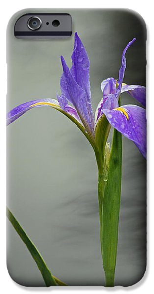 Rainy Day iPhone Cases - Purple Iris iPhone Case by Suzanne Gaff