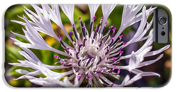 Flower Gardens Photographs iPhone Cases - Macro Flower iPhone Case by Martin Newman
