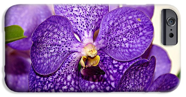 African-american Institute iPhone Cases - Purple Orchid iPhone Case by Everett Spruill