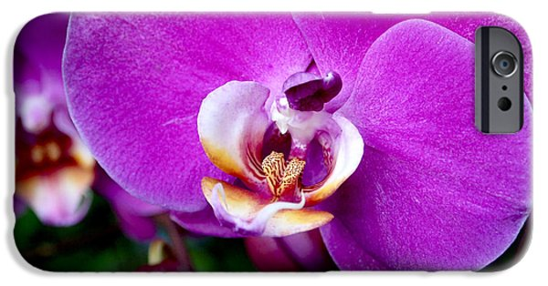Nature Photographs iPhone Cases - Purple Orchid iPhone Case by Rona Black