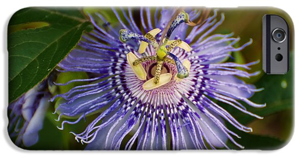 Passionflower iPhone Cases - Purple Passion flower iPhone Case by Chris Flees