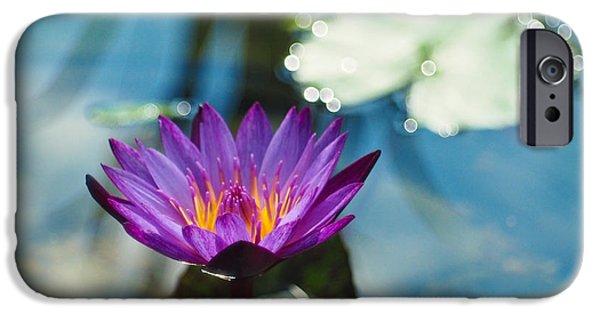 Water Lilly iPhone Cases - Purple Passion iPhone Case by Linda Unger