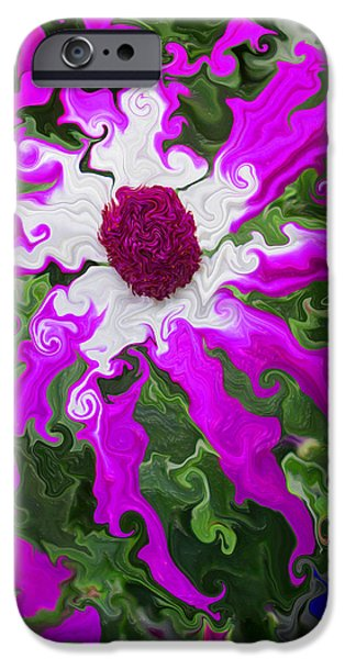 Pericallis iPhone Cases - Floating Pericallis iPhone Case by Kathy Moll