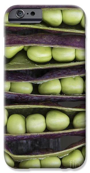 Botanical Photographs iPhone Cases - Purple Podded Pea Pattern iPhone Case by Tim Gainey