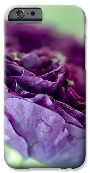 Purple Rose iPhone Case by Frank Tschakert