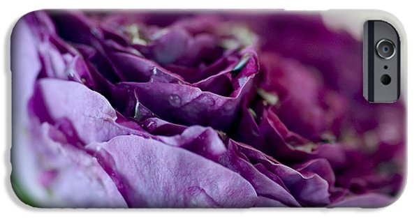 Rose iPhone Cases - Purple Rose iPhone Case by Frank Tschakert