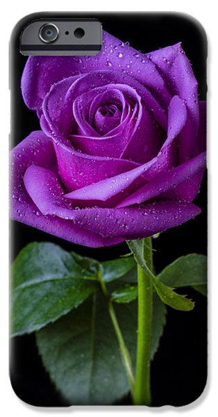Wet Petals iPhone Cases - Purple Rose iPhone Case by Garry Gay