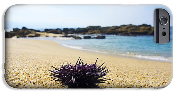 Escape iPhone Cases - Purple Seastar iPhone Case by Aged Pixel