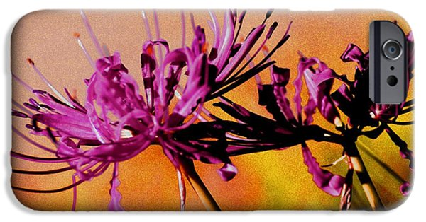 States iPhone Cases - Purple Spider iPhone Case by Tammara Young