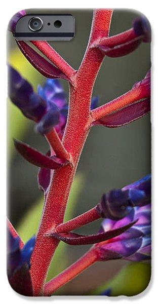 Purple Spike Bromeliad iPhone Case by Sharon Cummings