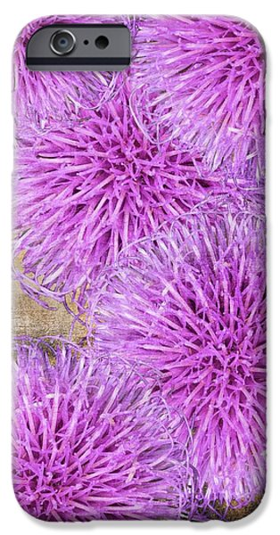 Close Up Floral iPhone Cases - Purple thistle - 2 iPhone Case by Rudy Umans