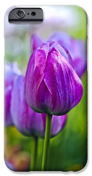 Summer iPhone Cases - Purple Tulip iPhone Case by Tilen Hrovatic