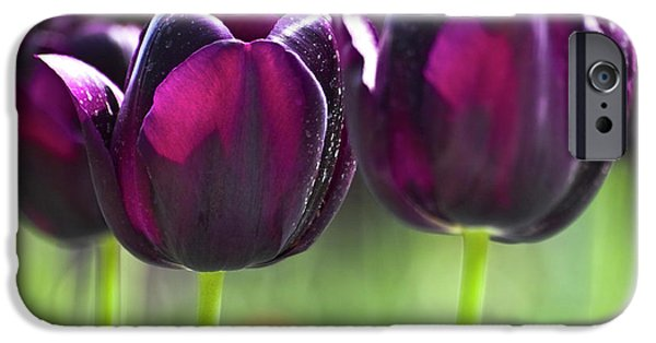Floral Photographs iPhone Cases - Purple tulips iPhone Case by Heiko Koehrer-Wagner