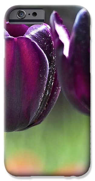 Purple tulips iPhone Case by Heiko Koehrer-Wagner