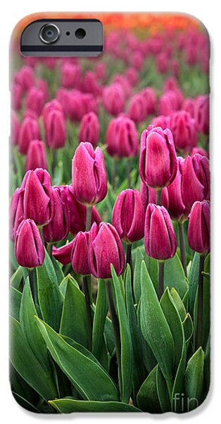 Industry iPhone Cases - Purple Tulips iPhone Case by Inge Johnsson