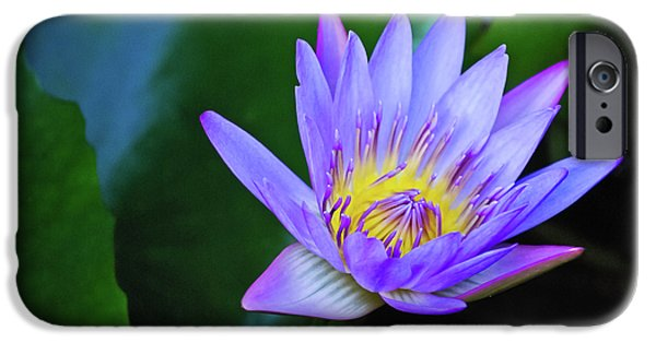 Purple And Green iPhone Cases - Purple Water Lily iPhone Case by Christi Kraft