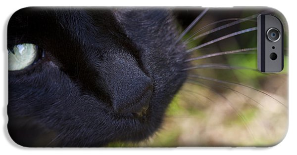 Recently Sold -  - Fauna iPhone Cases - Purrrrty Please iPhone Case by F Innes - Finesse Fine Art