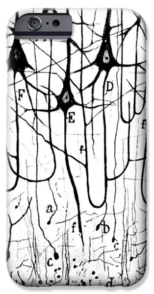 Biology iPhone Cases - Pyramidal Cells Illustrated By Cajal iPhone Case by Science Source