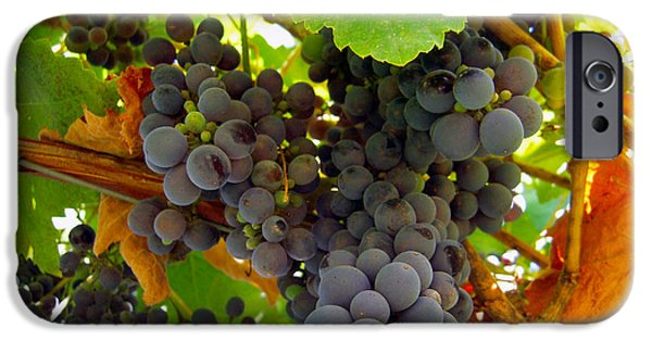 Malbec iPhone Cases - Pyrenees Winery Grapes iPhone Case by Michele  Avanti