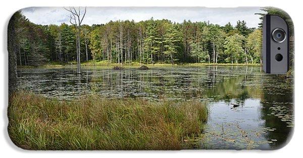 Central Massachusetts iPhone Cases - Quabbin Wetlands iPhone Case by J Scott Davidson