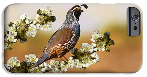 California Quail iPhone Cases - Quail in Cherry Tree iPhone Case by Laird Roberts