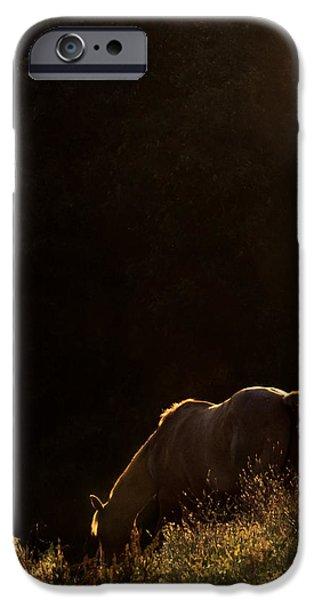 American Quarter Horse iPhone Cases - Quarter in the Sun iPhone Case by Leslie Heemsbergen