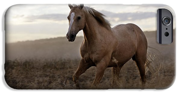 American Quarter Horse iPhone Cases - Quarter Or Paint Horse iPhone Case by M. Watson
