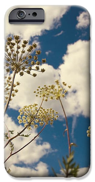 Queen Anne Lace and Sky I iPhone Case by Jenny Rainbow