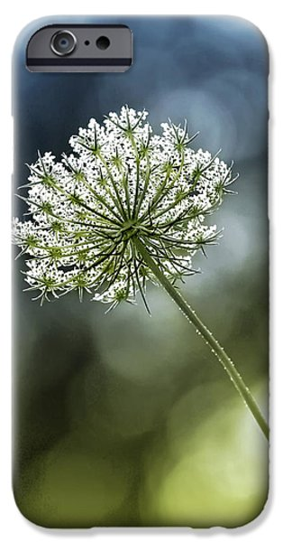 Duo Tone iPhone Cases - Queen Annes Lace iPhone Case by Carolyn Derstine