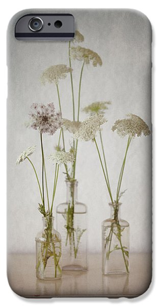 Recently Sold -  - Summer iPhone Cases - Queen Annes Lace End of Summer iPhone Case by Carol Leigh