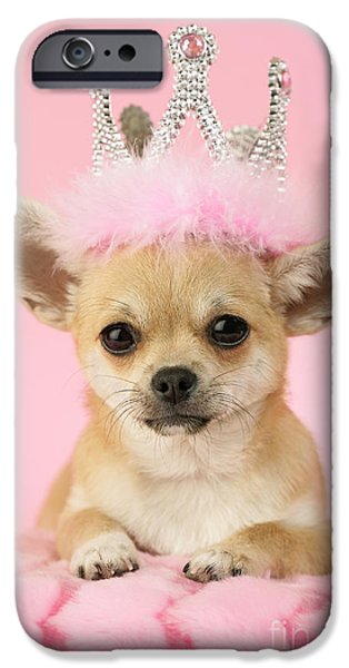 Puppy Digital Art iPhone Cases - Queen Chihuahua iPhone Case by Greg Cuddiford
