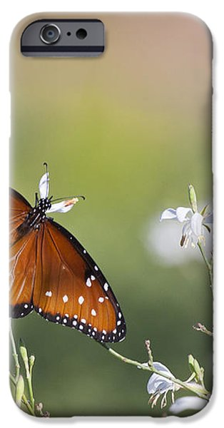 Queen in morning light iPhone Case by Ruth Jolly