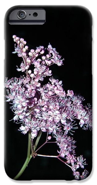 Andrea Lazar iPhone Cases - Queen of the Prairie Meadowsweet iPhone Case by  Andrea Lazar