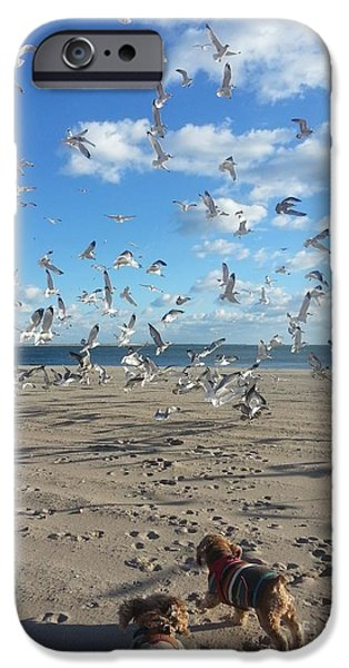Flying Seagull iPhone Cases - Quick Fly Away iPhone Case by John Telfer