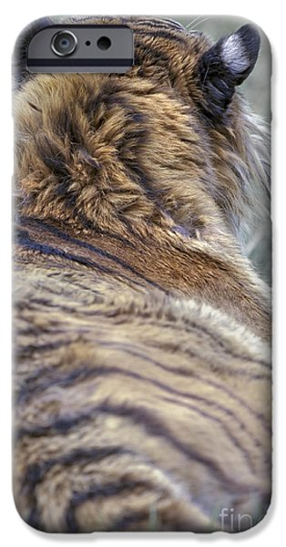 Animals Photographs iPhone Cases - Quietly Aproach iPhone Case by Wildlife Fine Art
