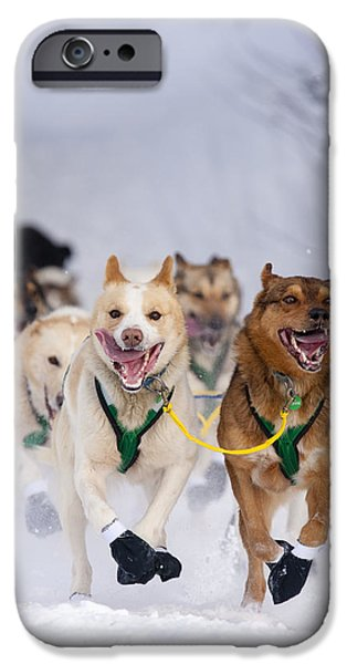 Willow Lake iPhone Cases - Quinn Iten Lead Dogs Running On Long iPhone Case by Jeff Schultz