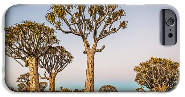 Shadow iPhone Cases - Quiver Tree Sunset iPhone Case by Duane Miller